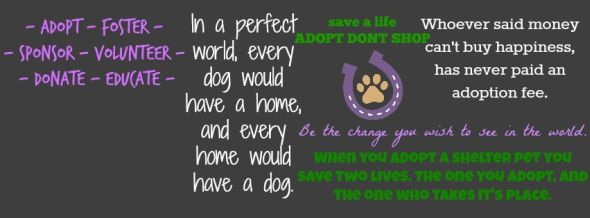 Adopt a Pet - Save Two Lives